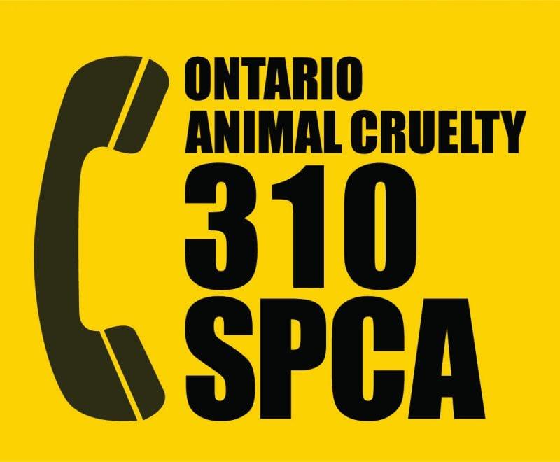 310 SPCA